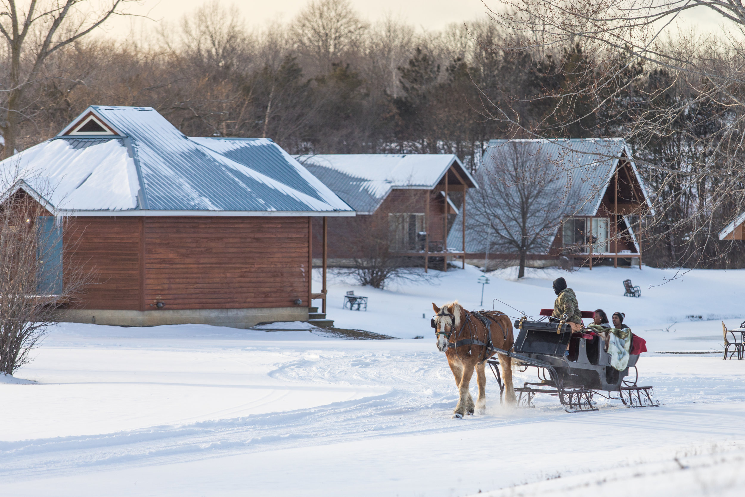 Horse drawn carriage in the snow passing the cabins at Serenity Springs.