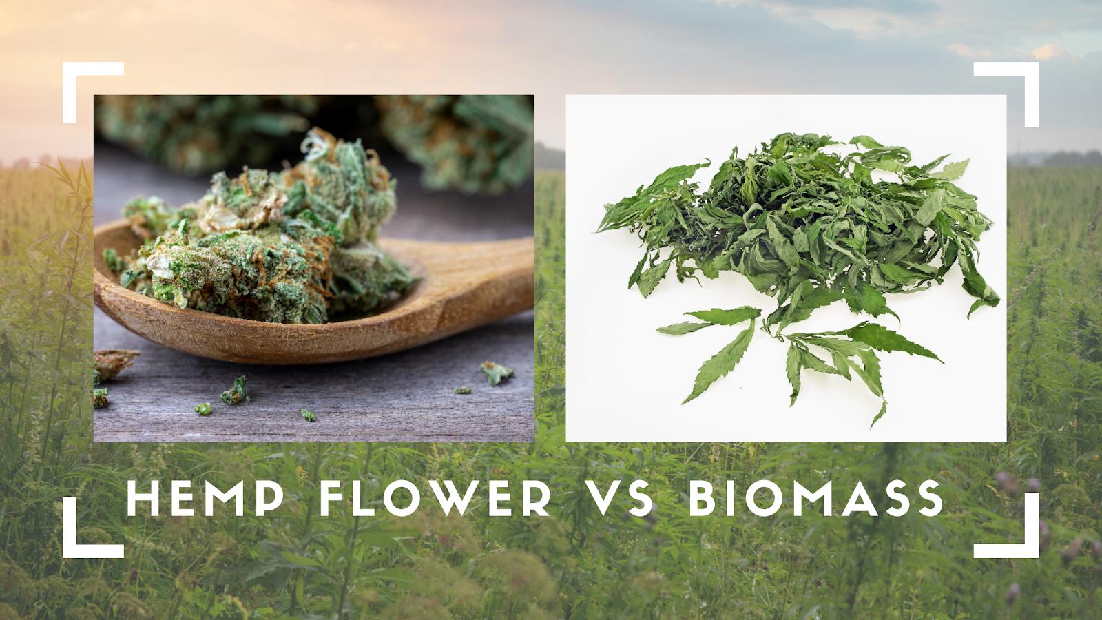 Hemp Flower vs Biomass