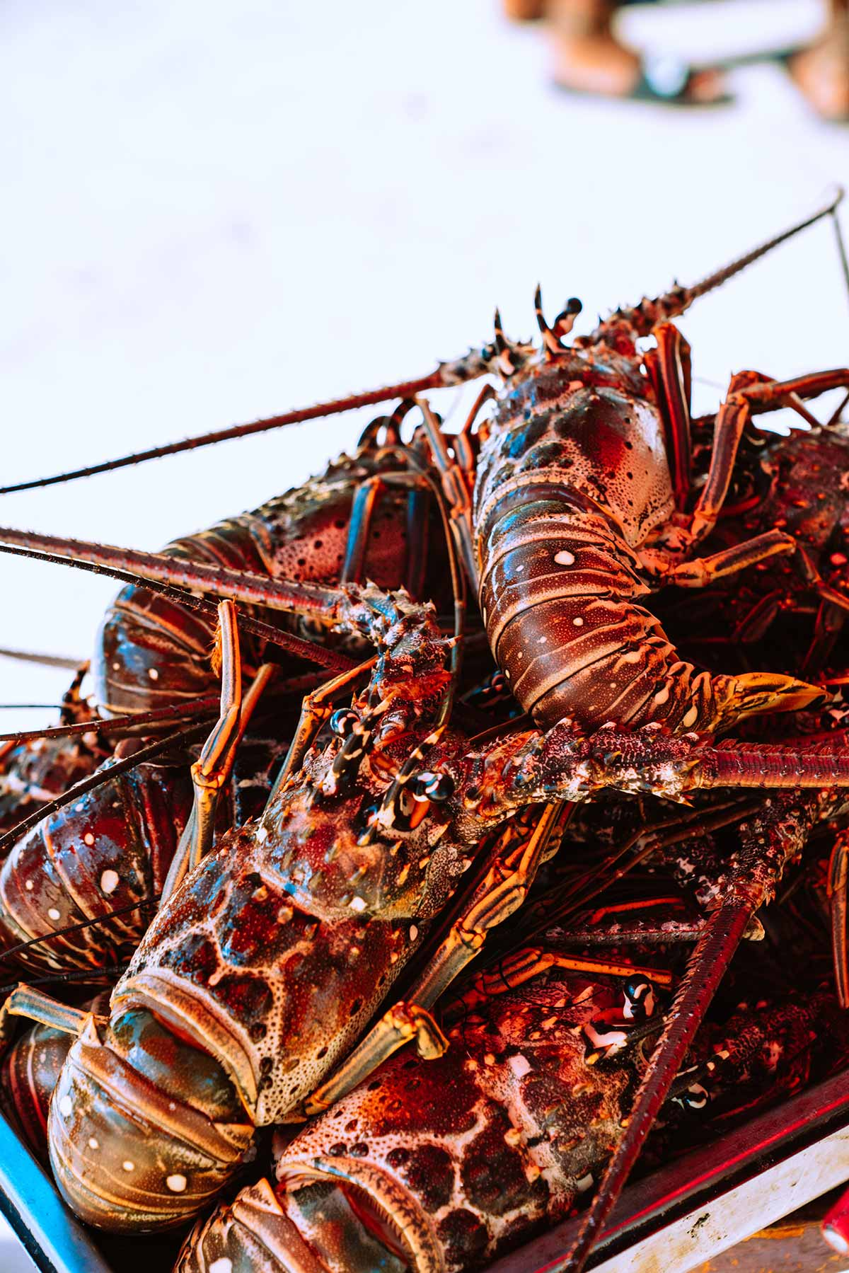 Trident experience in seafood processing