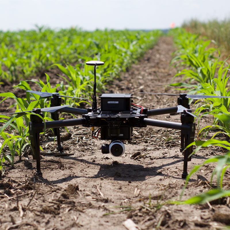 Picture of a drone sitting in a farm field between rows of corn.