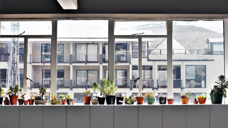 Potted plants line a long white windowsill