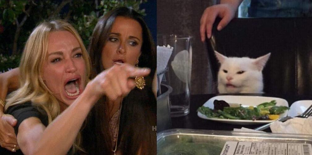 woman yelling at a cat meme