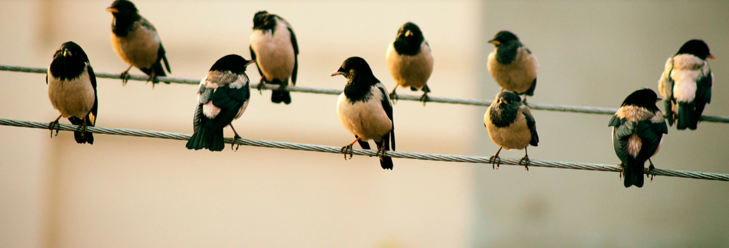 birds distanced on two wires