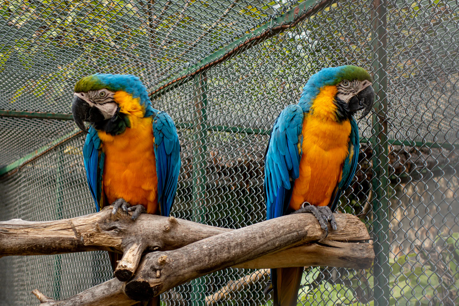 two parrots facing away from each other