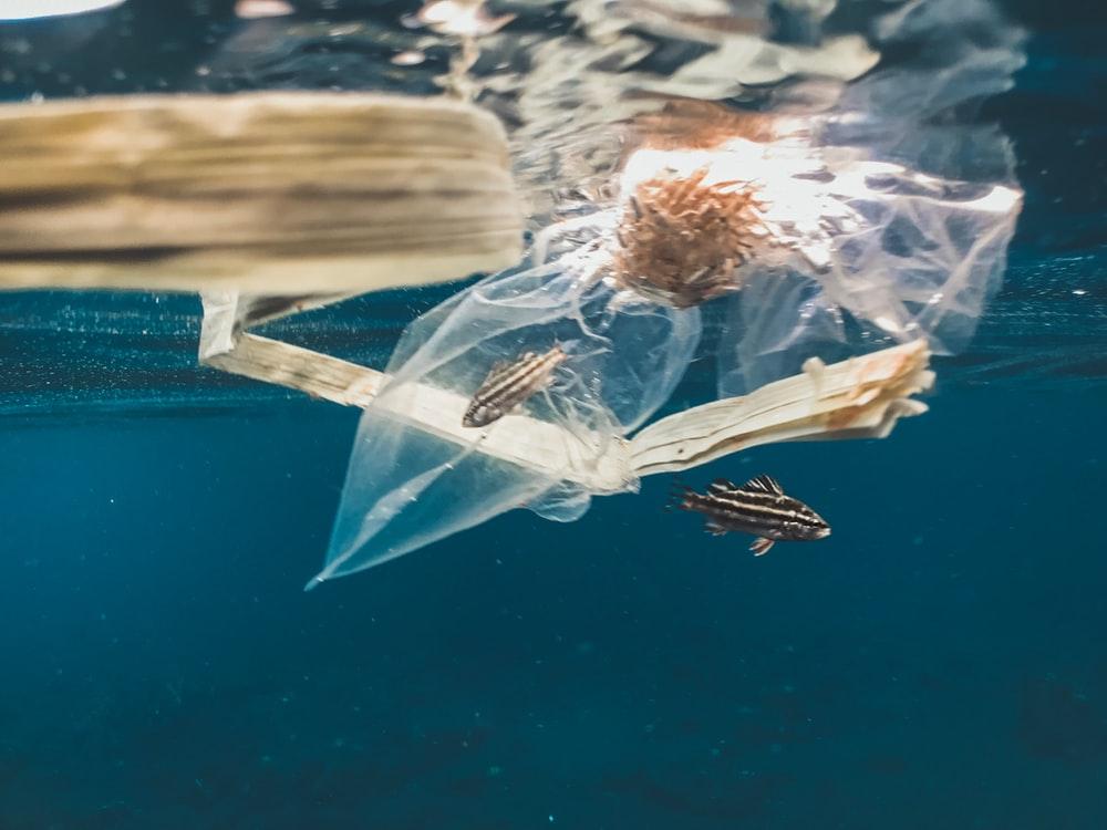 fish caught in a plastic bag