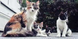 Support Moggies' Cat Rescue