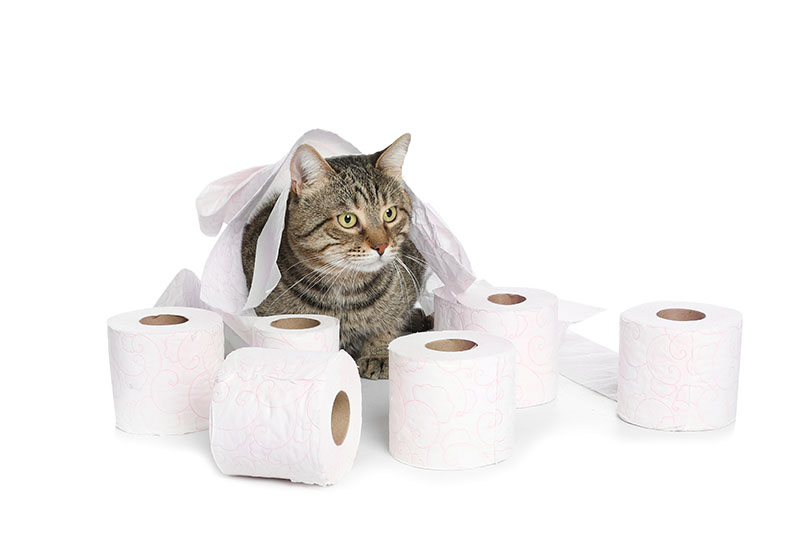 A cat with tissue paper