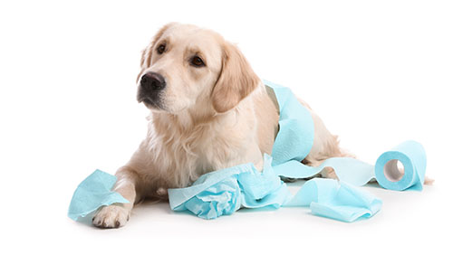 A dog with tissue paper