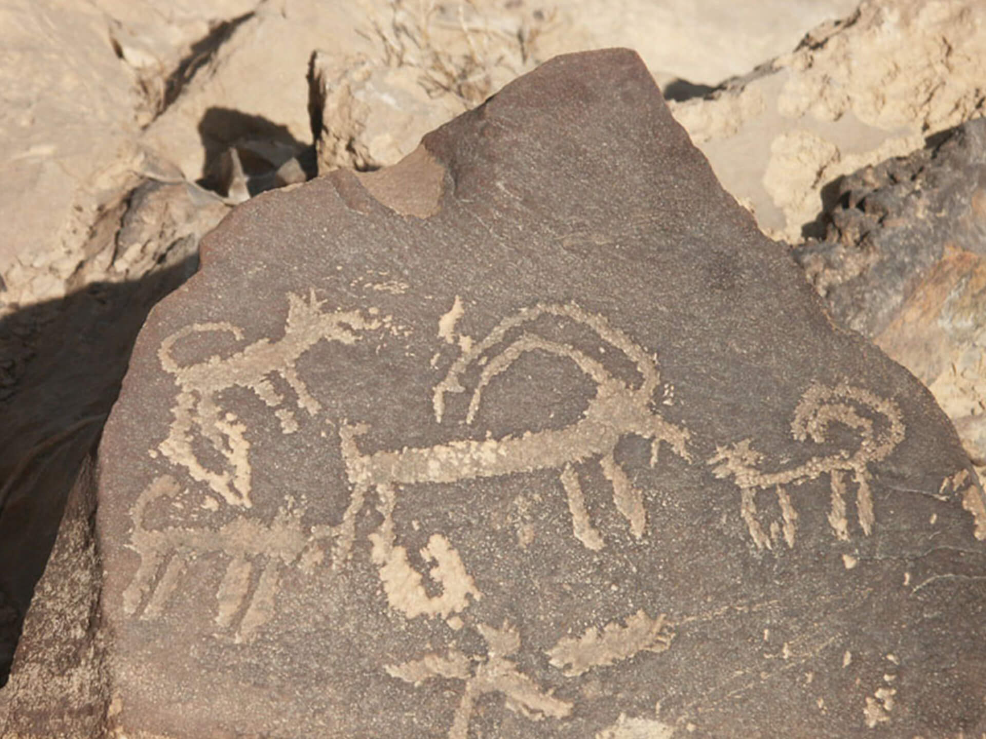 Animals rock paintings