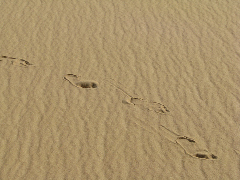 עקבות בדיונות במדבר המערבי