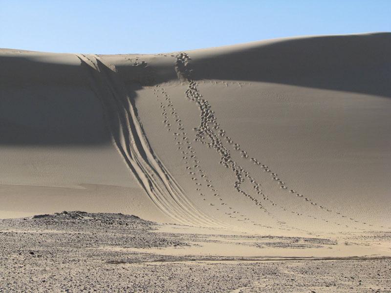 לטייל במדבר המערבי - ירידה בדיונה