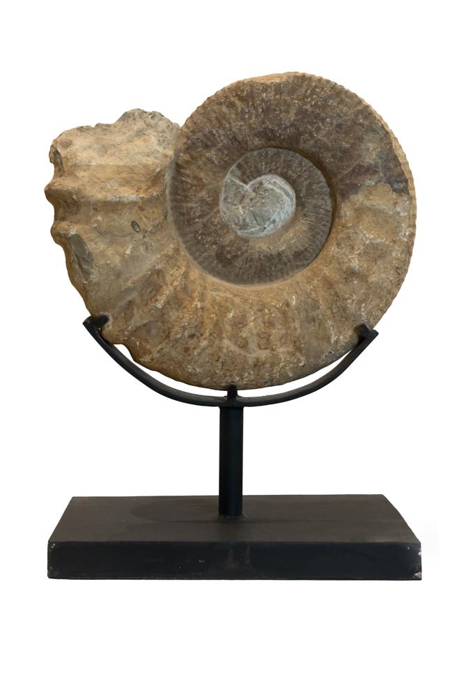 Fosil amonities