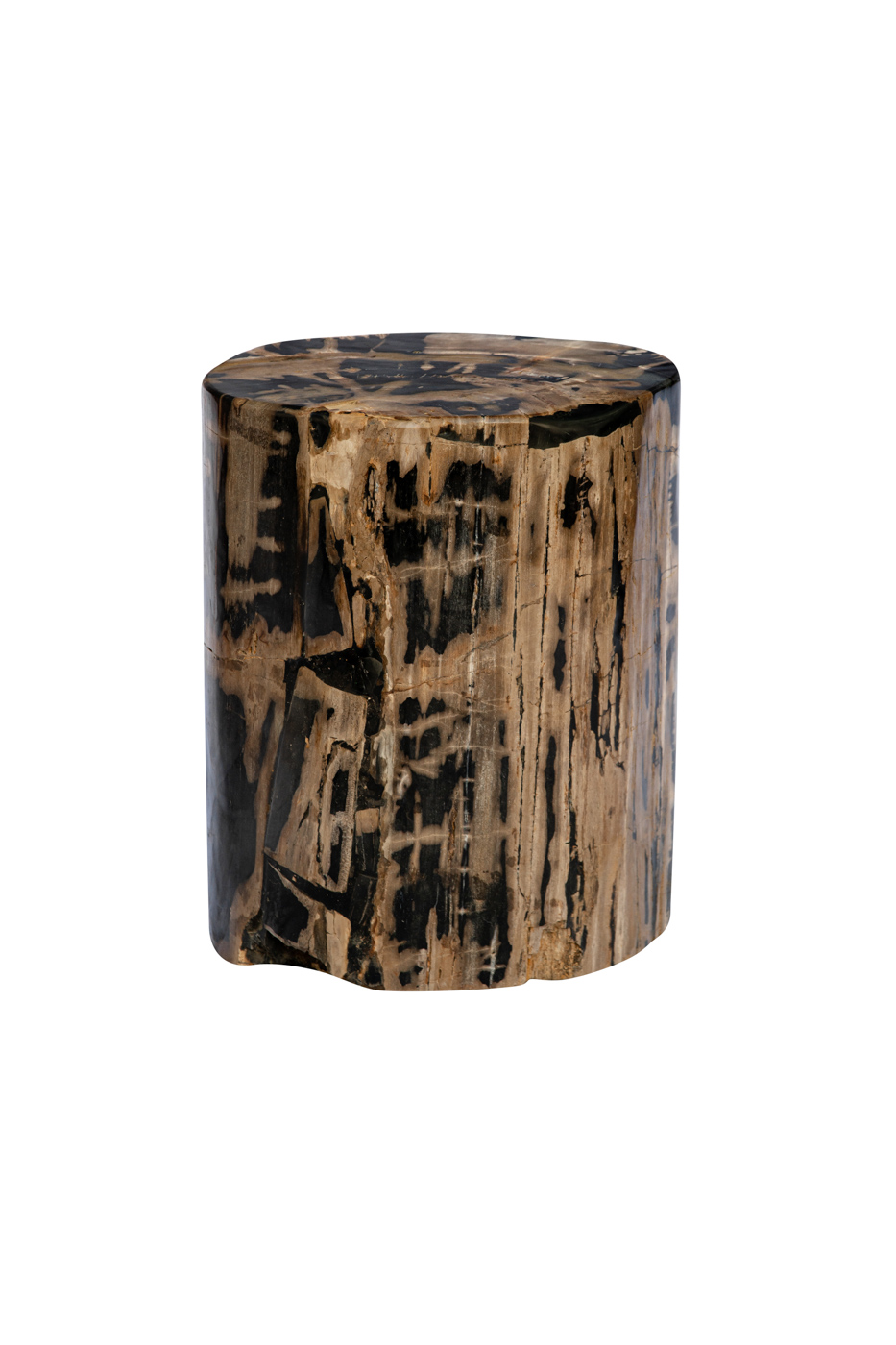 Fossilized wood trunk with black betas
