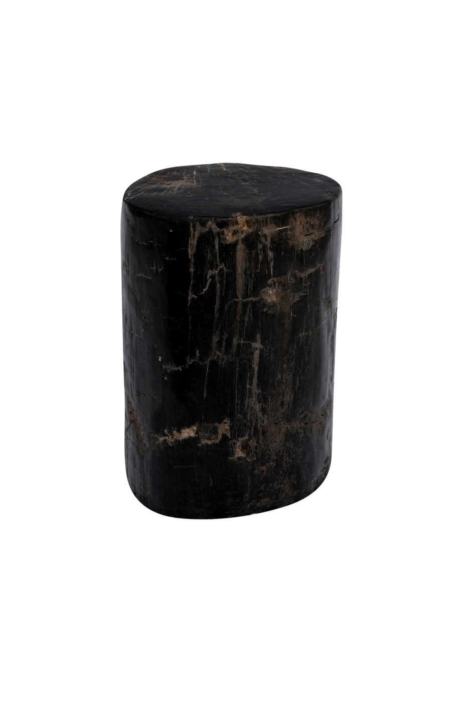 Black fossilized wood log