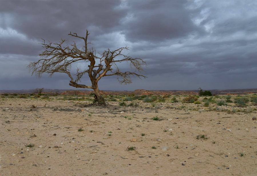 סדנת צילום במדבר