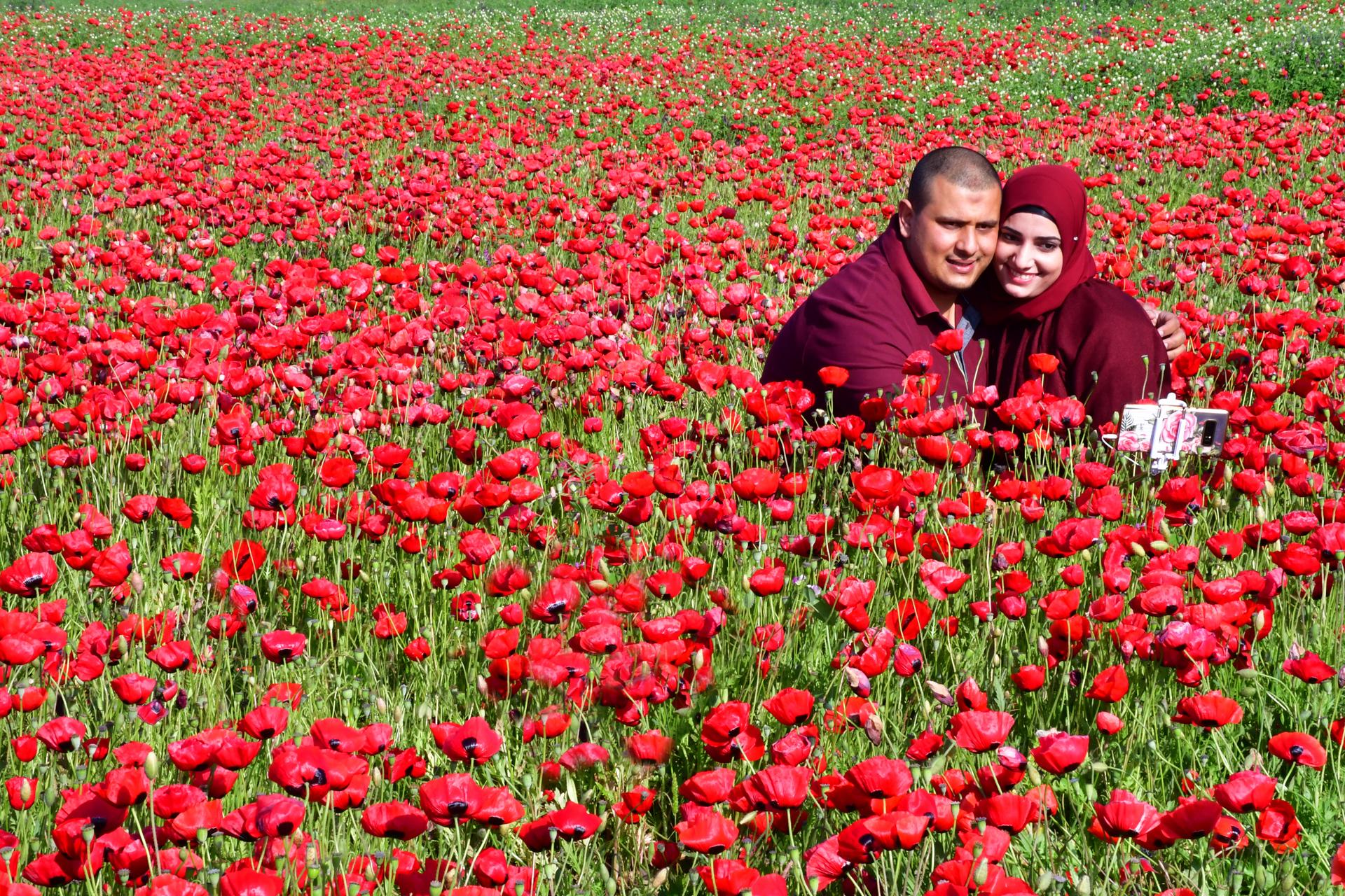 אדום - פרגים תל מגידו - יואל שתרוג - אדמה יוצרת - yoel sitruk