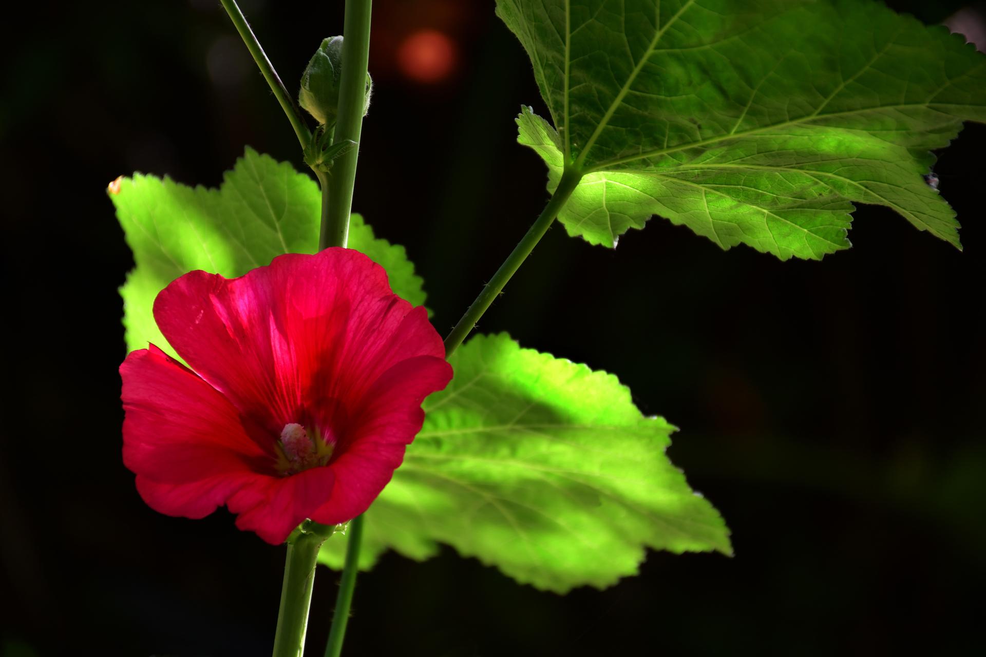 פרח משוגע - יואל שתרוג - אדמה יוצרת - yoel sitruk