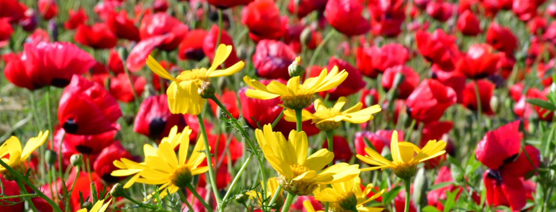 אדום צהוב - יואל שתרוג - אדמה יוצרת - yoel sitruk