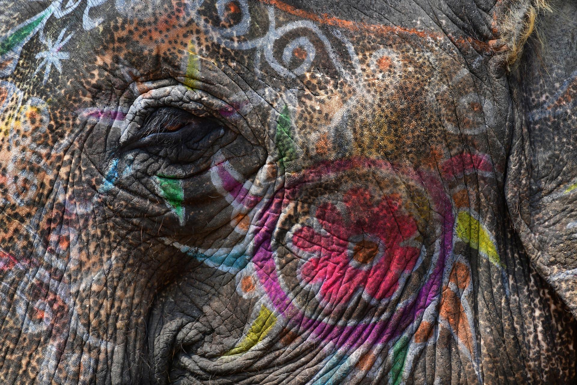 עין הפיל - הודו - יואל שתרוג - אדמה יוצרת - yoel sitruk