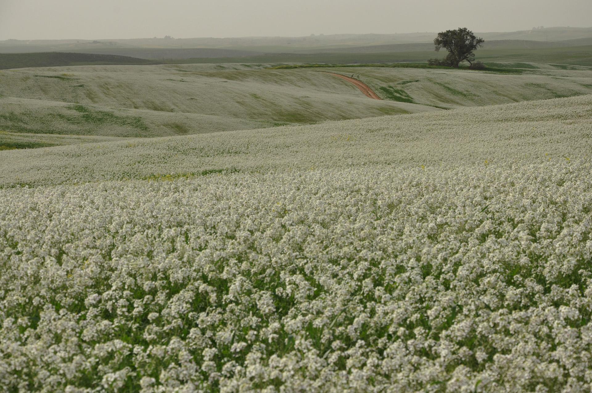 ימים לבנים - צפון הנגב - יואל שתרוג - אדמה יוצרת - yoel sitruk