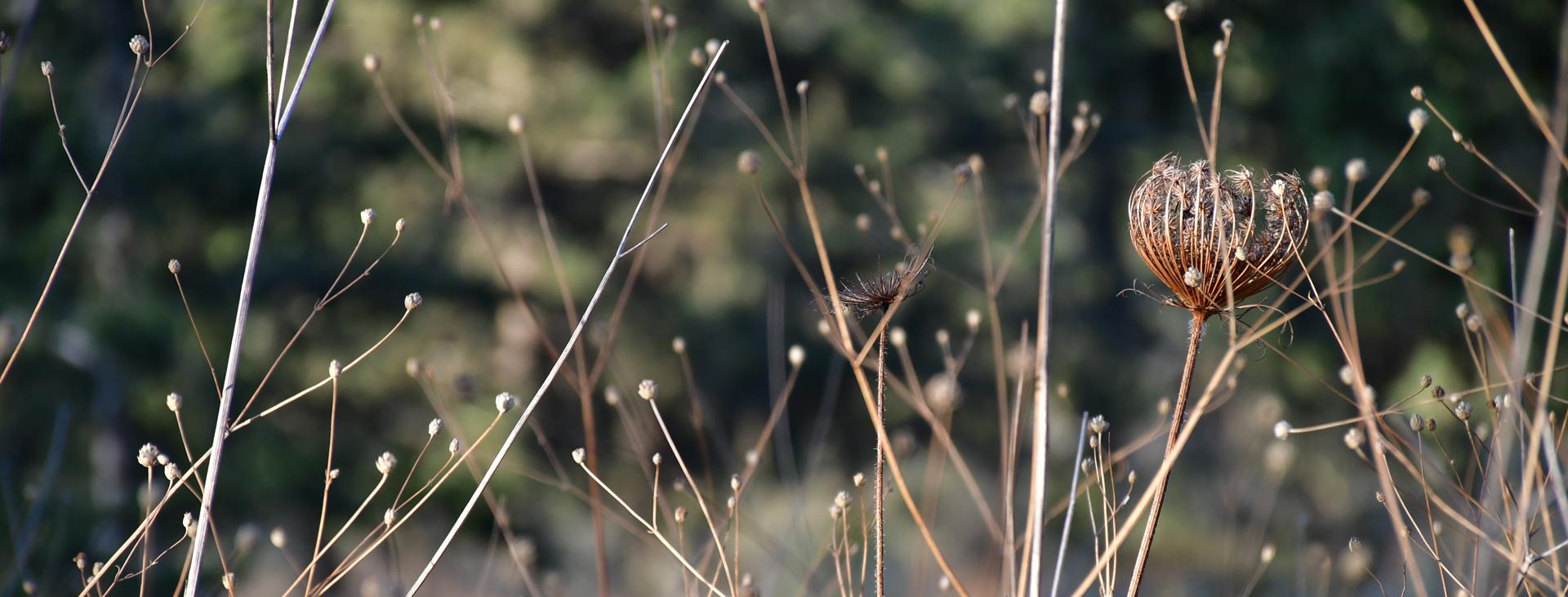 יואל שתרוג - אדמה יוצרת - yoel sitruk -יער לפיד - מסיבת התה של עליזה