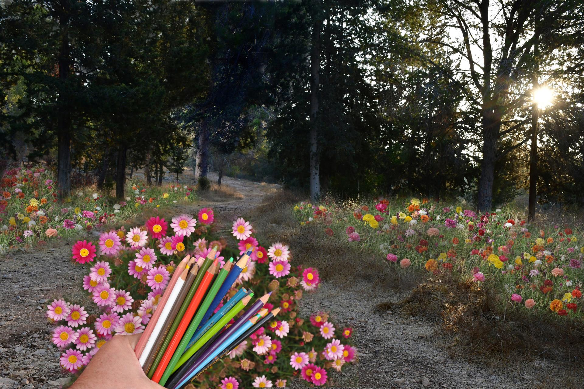 יואל שתרוג - אדמה יוצרת - yoel sitruk -צייר לי עולם - יער לפיד