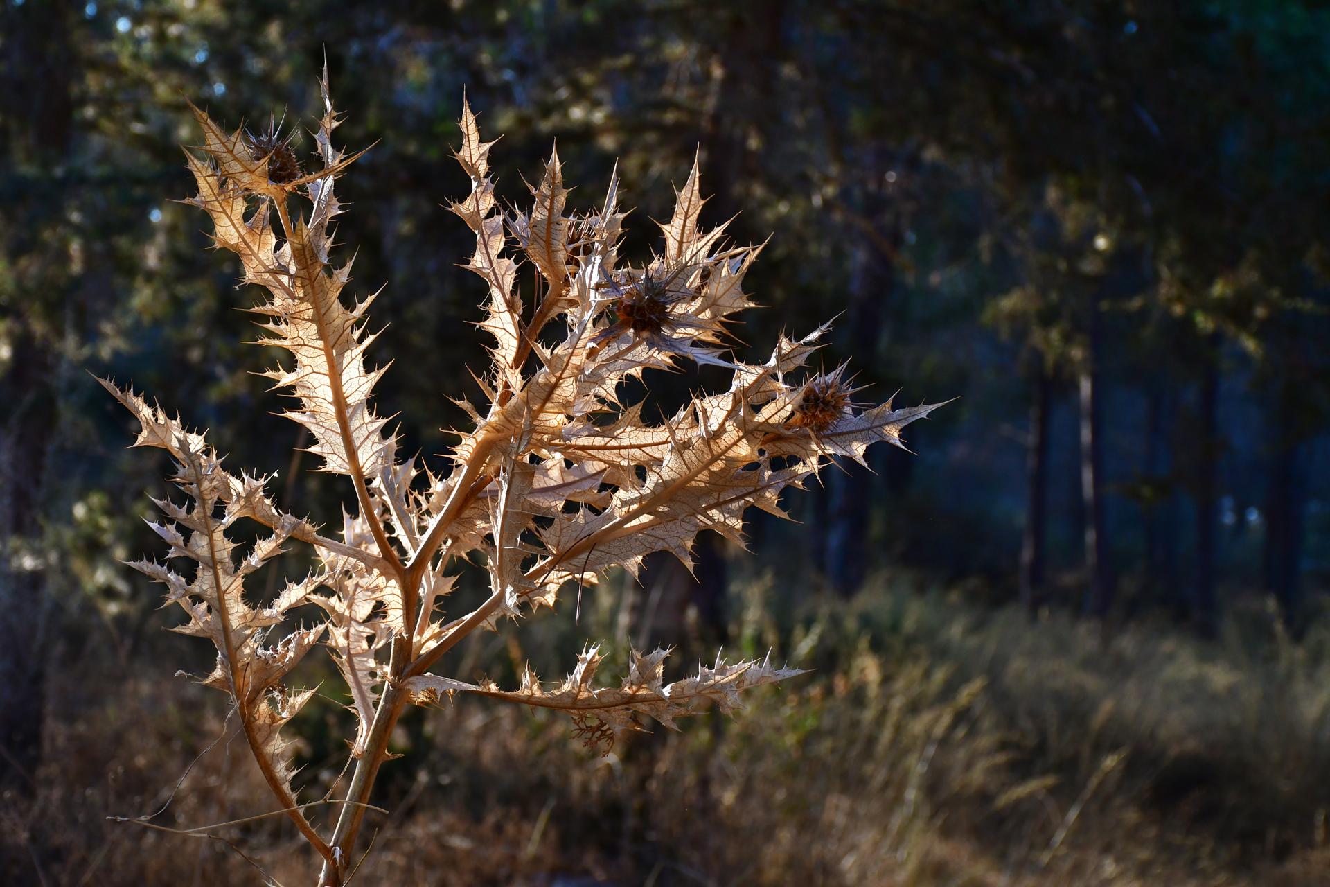 יואל שתרוג - אדמה יוצרת - yoel sitruk -סוף הקיץ - יער לפיד