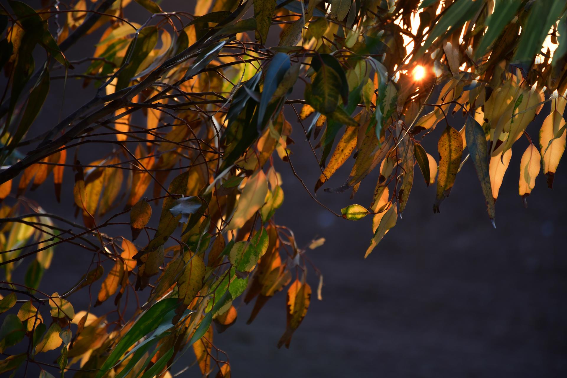 יואל שתרוג - אדמה יוצרת - yoel sitruk -שמש סתיו - יער להב- צילום בטבע - צהוב - עלי שלכת