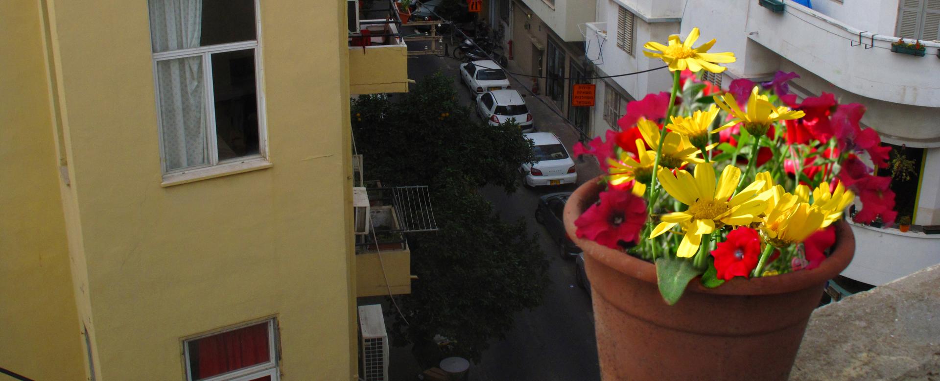 יואל שתרוג - אדמה יוצרת - yoel sitruk - תל אביב - פלורנטין