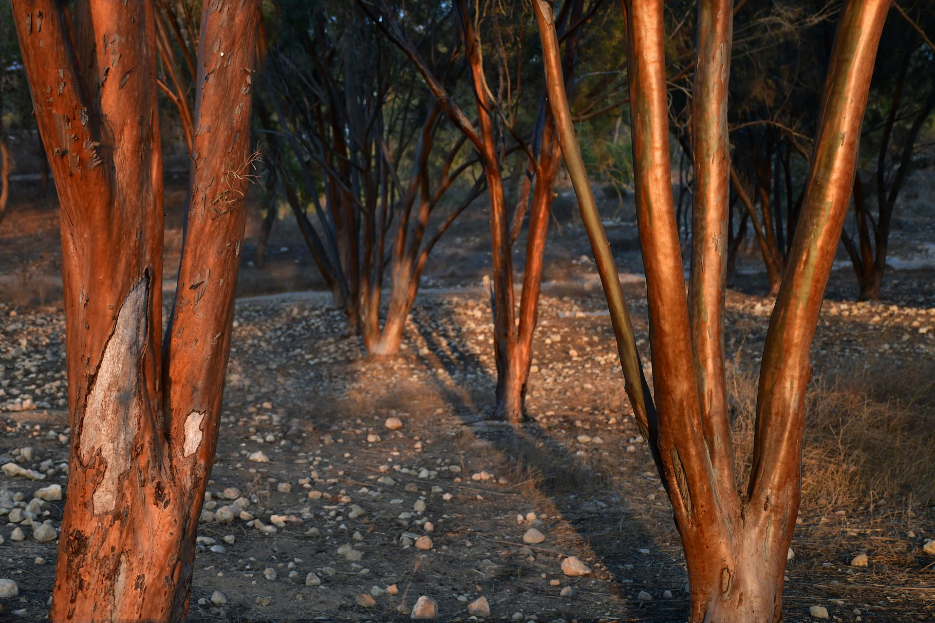 יער להב - יער מכושף - יואל שתרוג - אדמה יוצרת - yoel sitruk