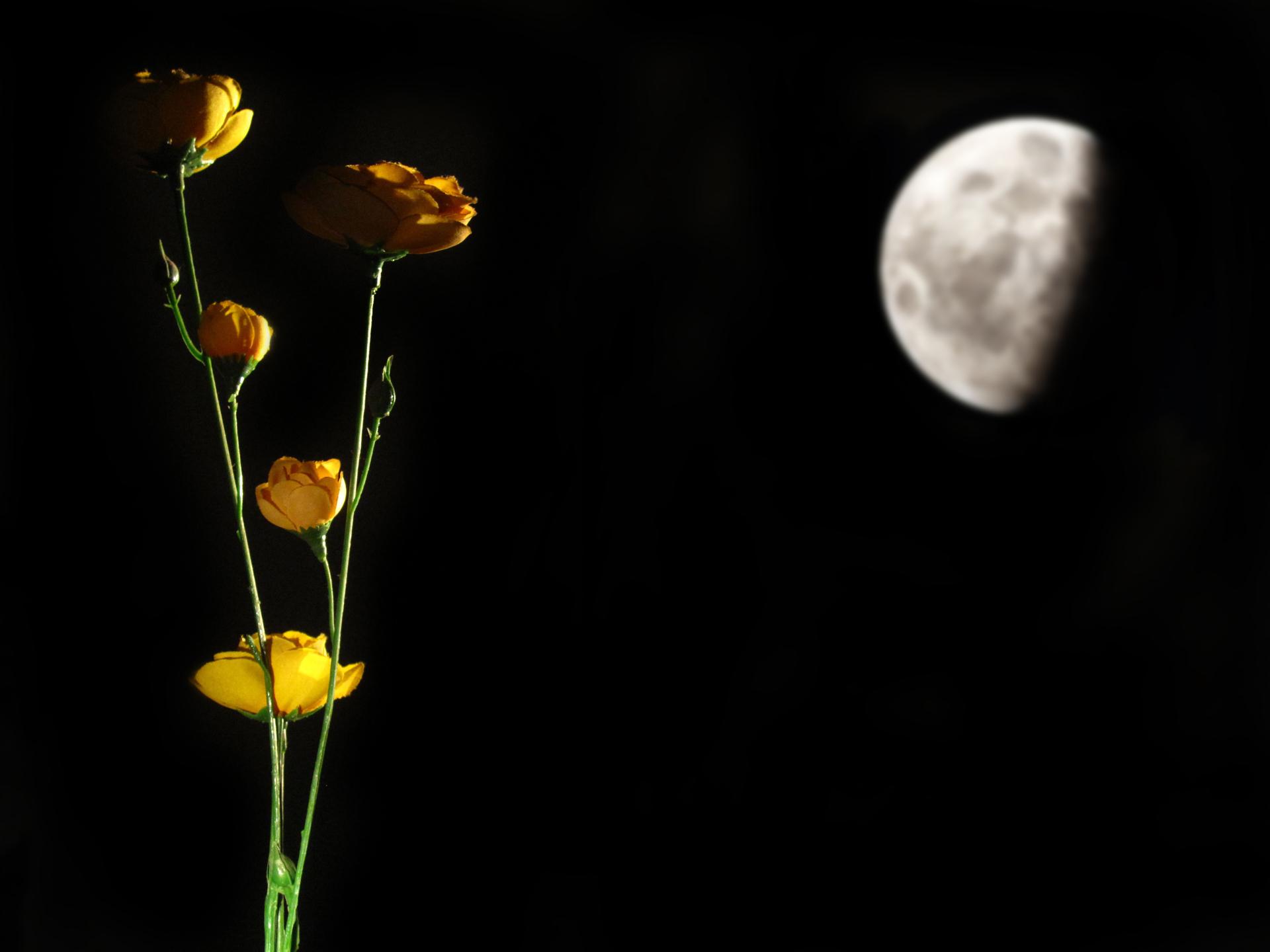 מוכה ירח - אור הירח - פטיפון - תקליט - פינק פלוייד - יואל שתרוג - אדמה יוצרת - yoel sitruk