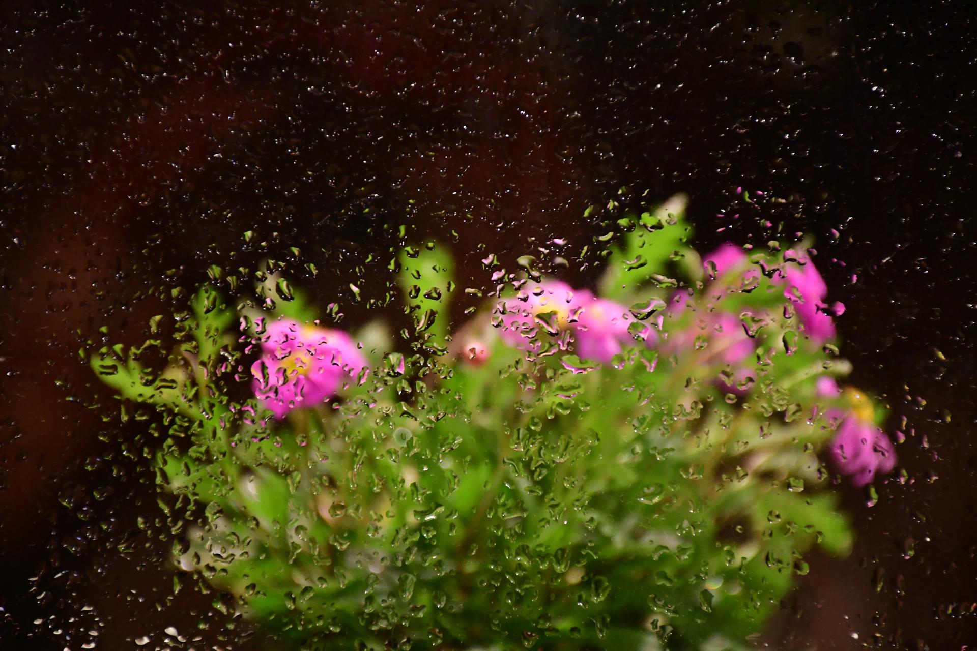 בין הטיפות - גשם - לפיד - יואל שתרוג - אדמה יוצרת - yoel sitruk