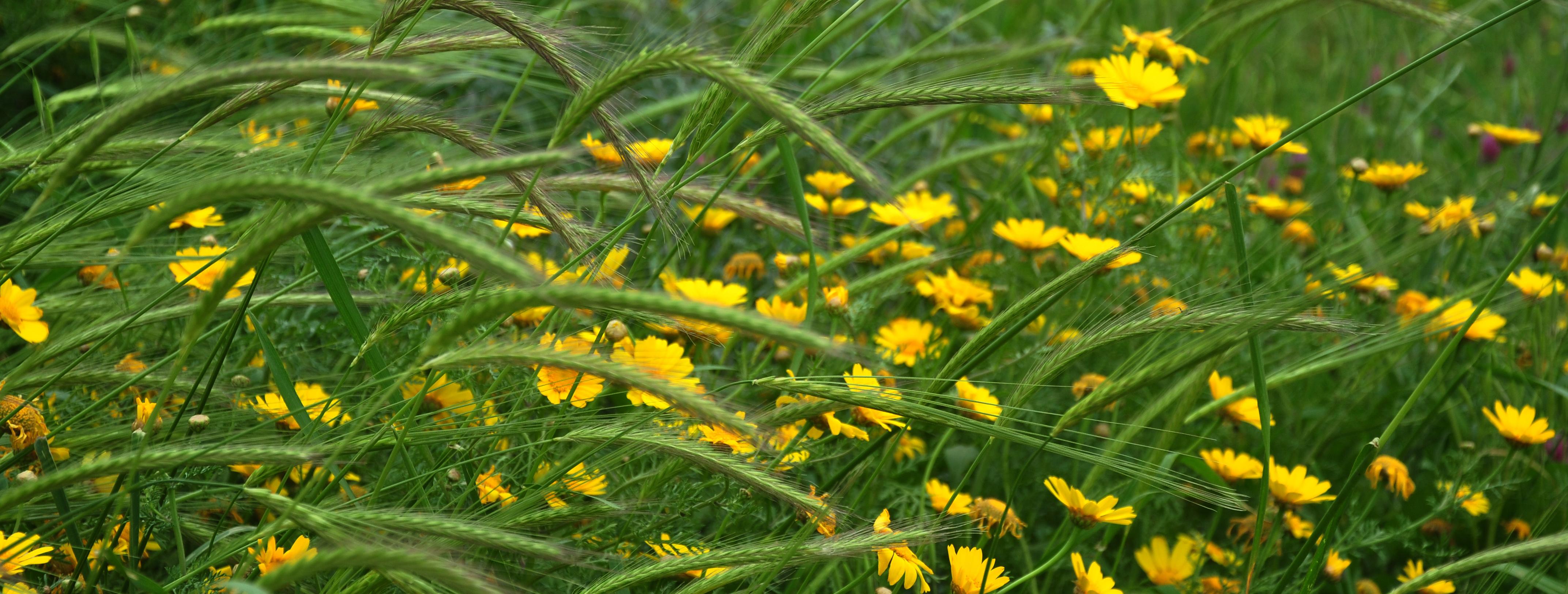 צהוב - ארץ עוץ - יואל שתרוג - אדמה יוצרת - yoel sitruk
