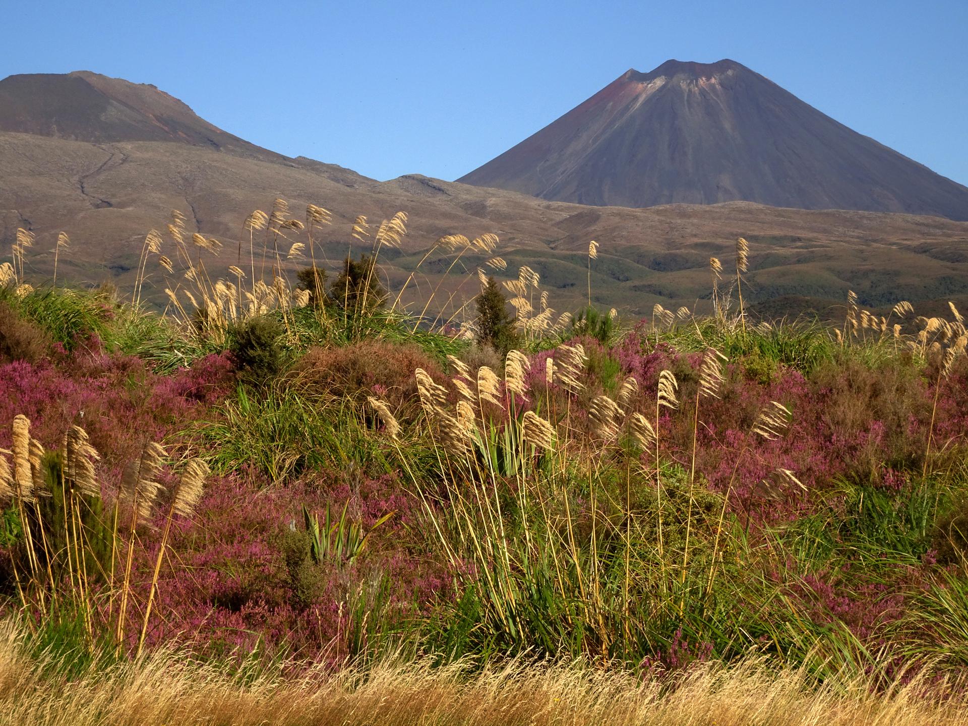 noam sitruk נועם שתרוג - ניו זילנד - הר געש - יופי - מרחבים