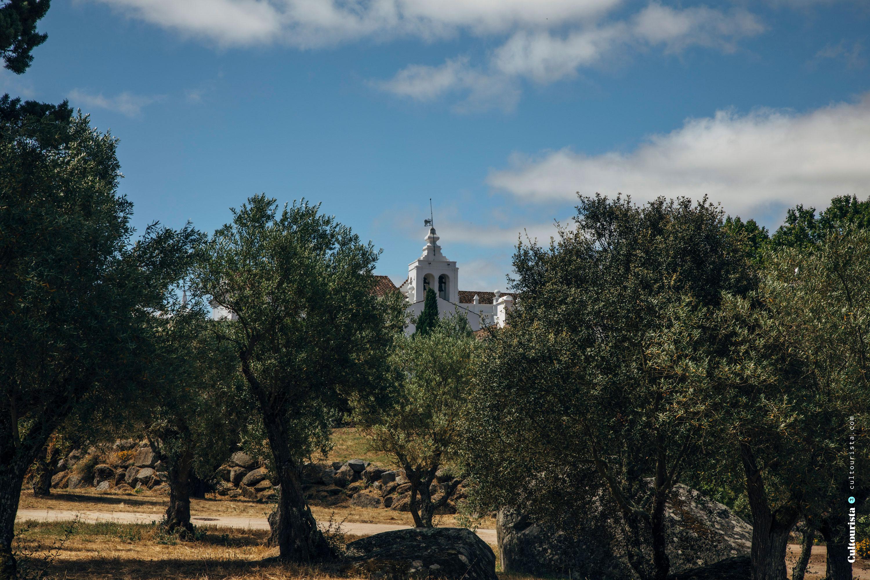 Outside trees at the Hotel Convento do Espinheiro in Évora Alentejo