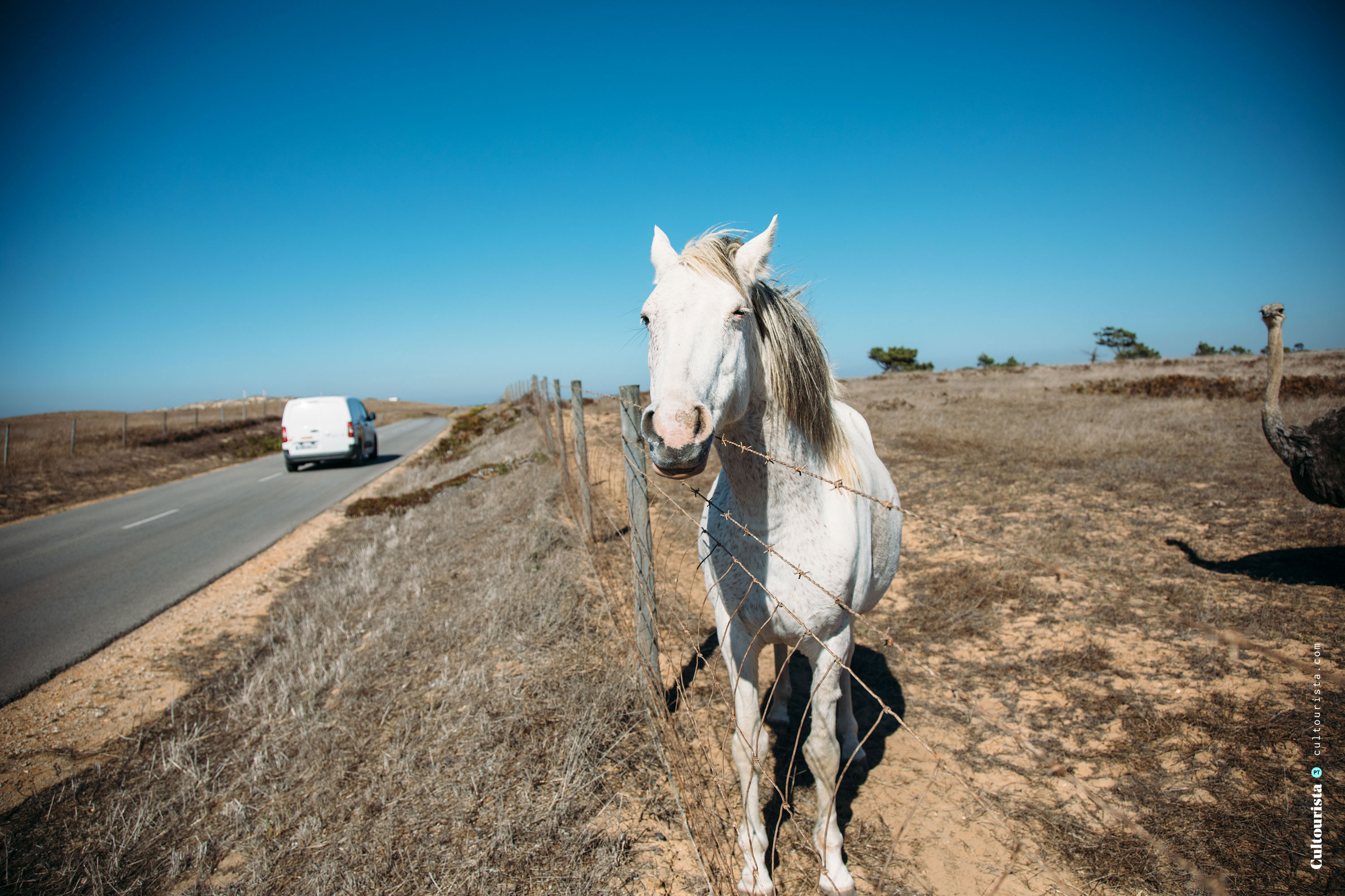 Horse by the road M1109 in Alentejo Portugal
