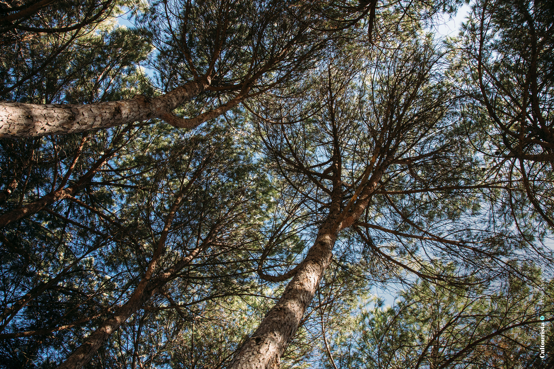 Trees at the Bela Vista Park in Lisbon Portugal