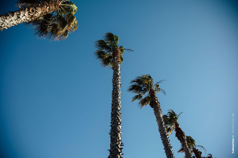 Palm trees at Costa da Caparica