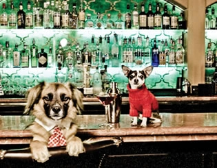 two dogs sitting at a bar