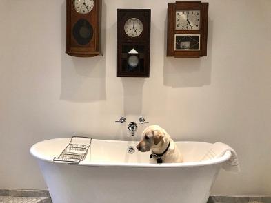 Yellow Labrador dog sitting in tub