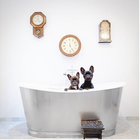 Bathtub with two dogs sitting in it