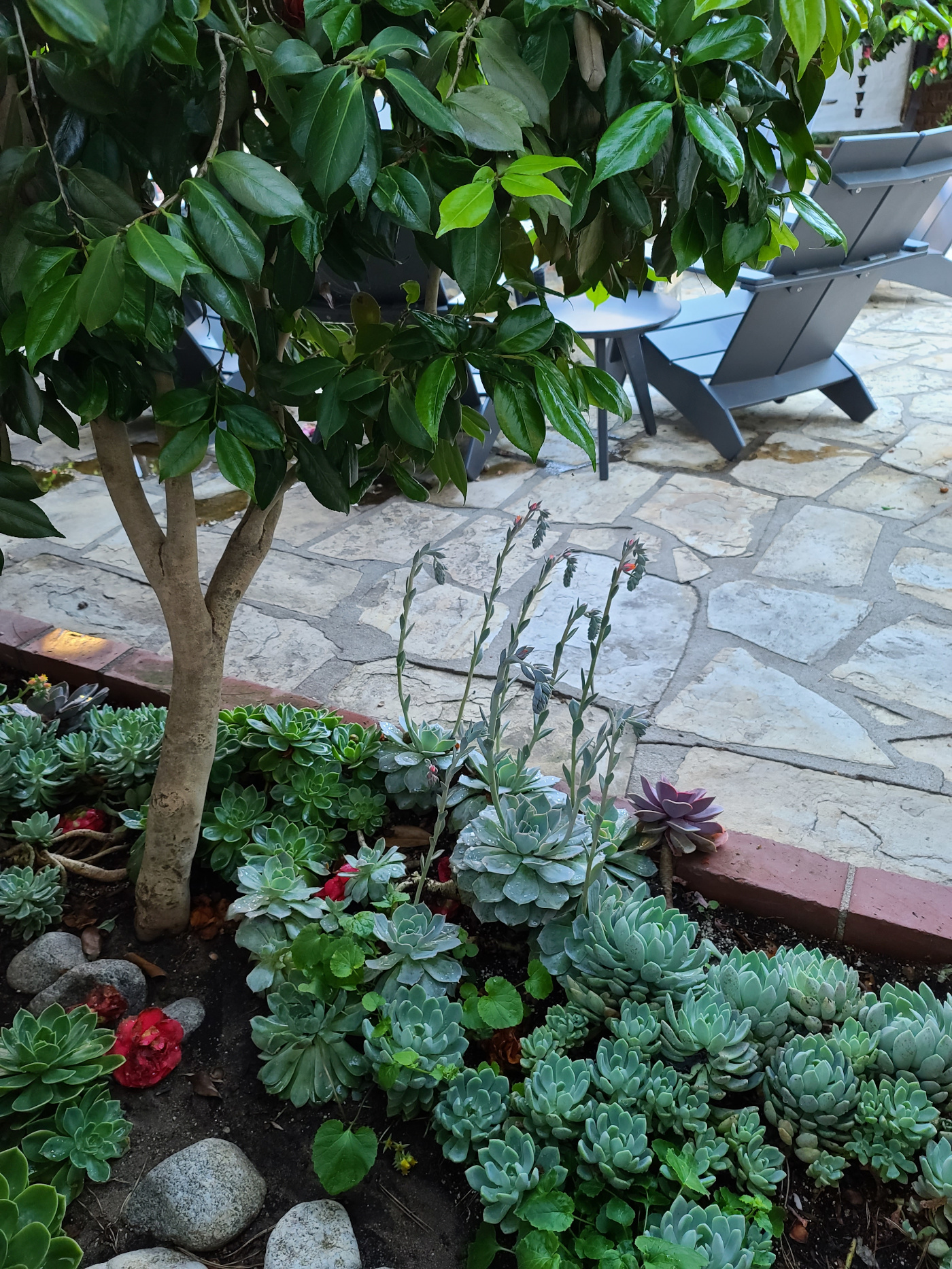 Green tree in courtyard