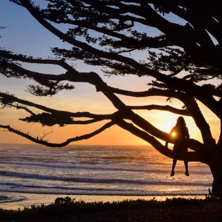 the sunset with a silhouetted tree and person in it