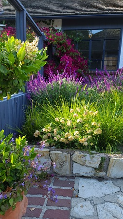 green vibrant garden plants