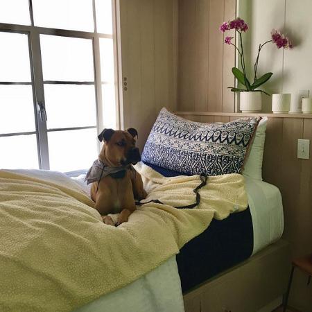boxer dog sitting on bed