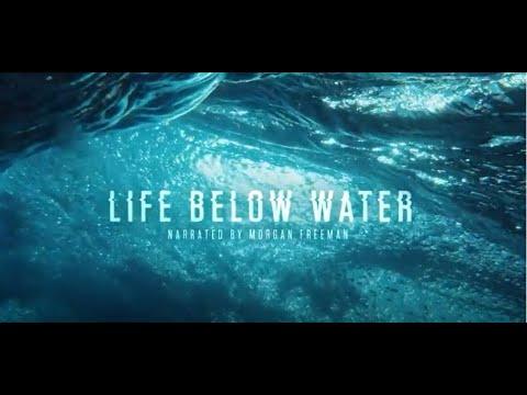 Life Below Water