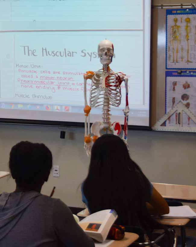 Students in biology class viewing a skeletal model