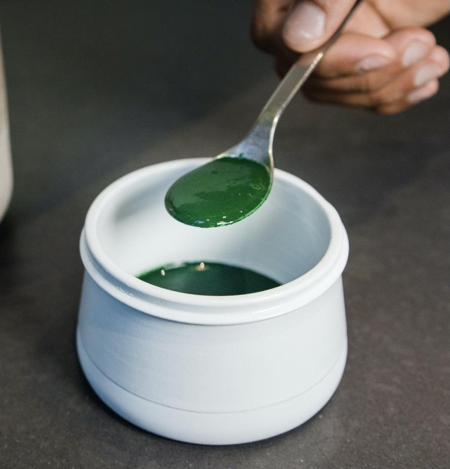 Harvested fresh spirulina