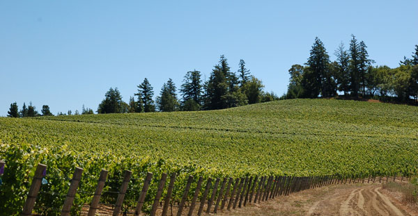 Kashaya Vineyard