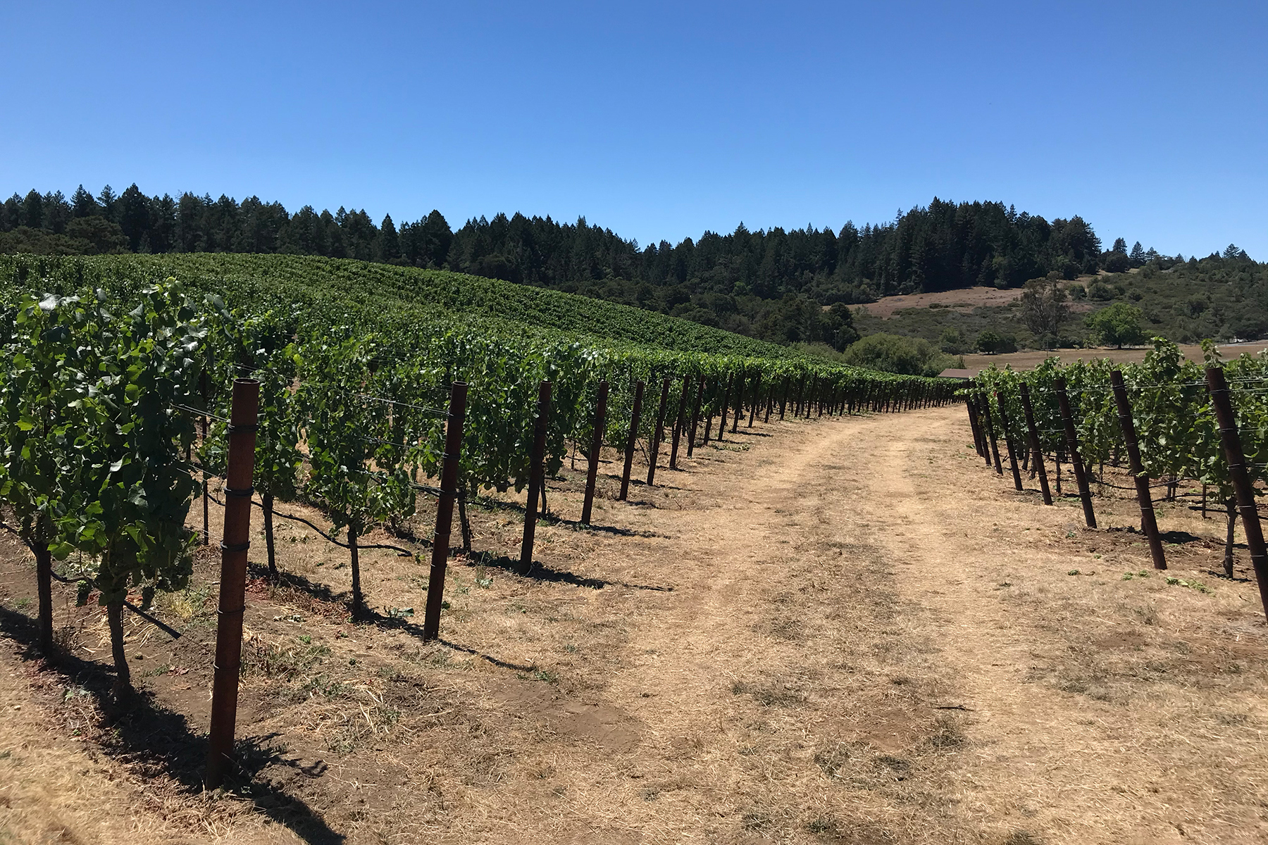 Silver Eagle Vineyard